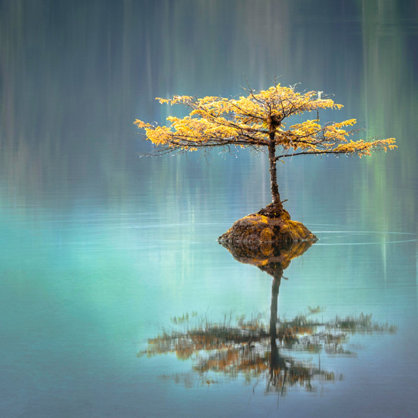 Tree in middle of Lake