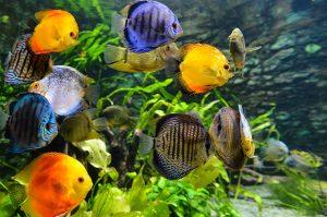 multi colored ocean fish