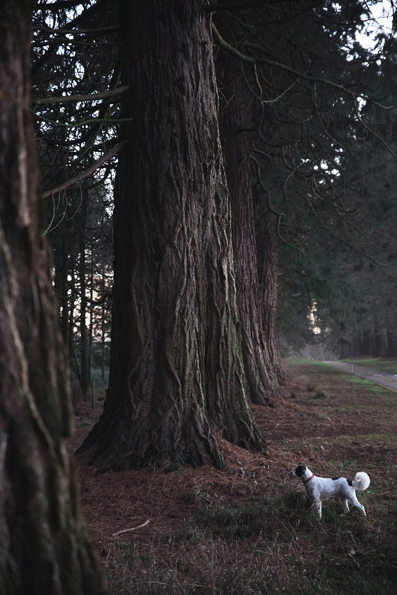 Black and White Dog Looking At Trees
