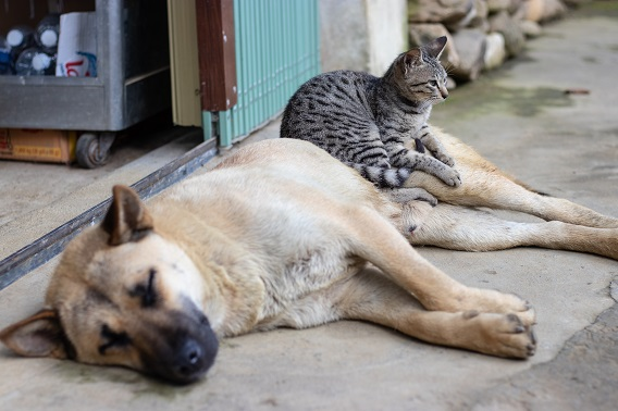 Cat Sitting On Dog