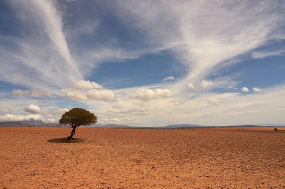 Desert Tree And Sky